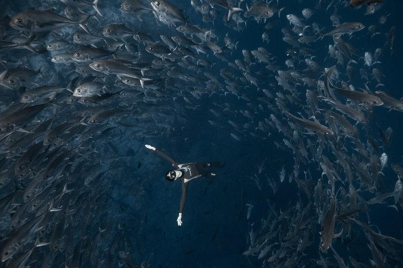 【画像】Red Bullが送る最大の捕食者でフリーダイビング、モルティブ・南極7