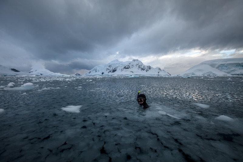 【画像】Red Bullが送る最大の捕食者でフリーダイビング、モルティブ・南極13