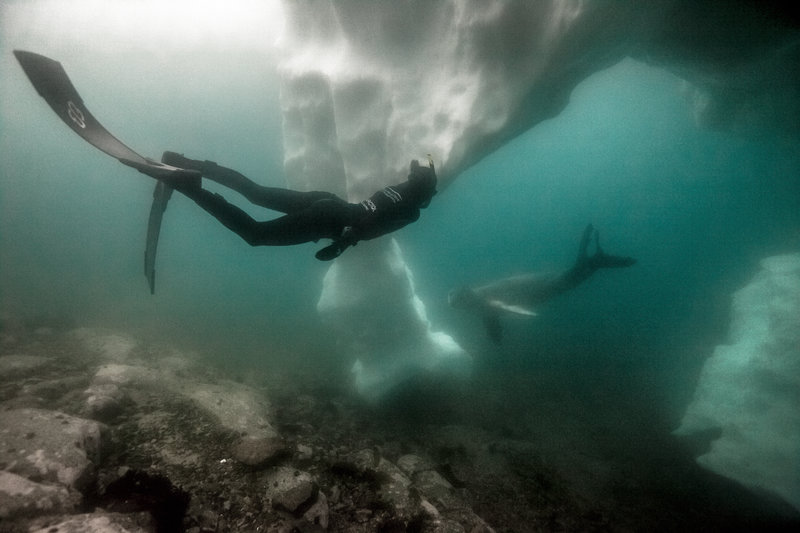 【画像】Red Bullが送る最大の捕食者でフリーダイビング、モルティブ・南極11
