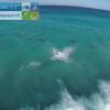 【動画】イルカの群れ波遊び動画、ドルフィンコープ