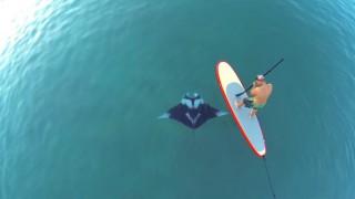 【空撮動画】カリブ海!SUPでパドル中にマンタが近づいてくる!