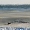 【画像】フローズンサーフィン?海が凍る?寒波でのサーフィン