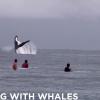 【動画】まじか・・・・サーフポイントにクジラが!byタヒチ島