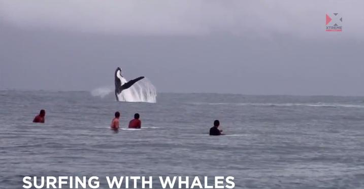 まじか・・・・サーフポイントにクジラが!byタヒチ島
