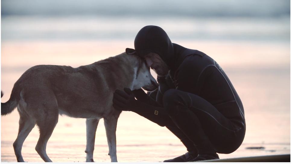 犬と癌で亡くなったサーファーの短編映画Denali(デナリ)