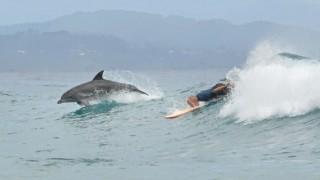 【動画】オーストラリアのバロンベイ、ワテゴズ・ビーチにてイルカとサーフィンする映像