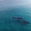 【動画】クジラとパドルボーディングinオーストラリア