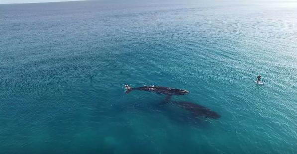 クジラとパドルボーディングinオーストラリア