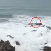 【動画】あわや大惨事ライディング後、岩に打ち上げられるサーファー