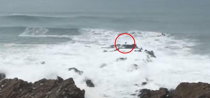 あわや大惨事ライディング後、岩に打ち上げられるサーファー