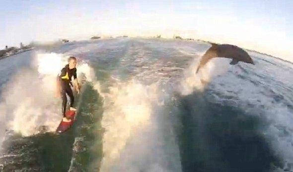画像荒、イルカとボートサーフィン