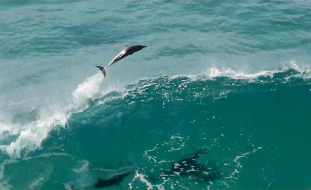 イルカのサーフィン、ゴールドコーストバイロンベイ