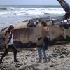【動画】米国西海岸のトレッスルズでクジラの座礁