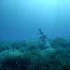 【動画】映像美!海に焦点を当てた国際海洋フィルムOCEAN FILM TOURトレーラー