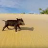【動画】サーフィンをする子豚、サーフィンピグレット登場