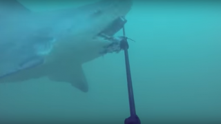 【動画】サメ対策SHARKBANZ(シャークバンズ)は効かない?