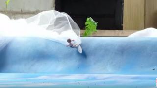 【動画】XTreme Videoが送るPlaymobil (プレイモービル)サーフィン動画