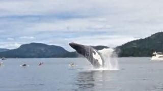 【動画】目の前にクジラが!inカナダ