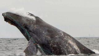 クジラと一緒に泳ぐフリーダイバー魔法の瞬間を記録