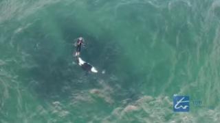 【動画】57歳のカヤッカー違反を犯しながらも、海のハンターシャチとのワルツ