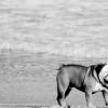 【動画】13年間サーフィンムービーに情熱を注ぐアーティストのショートクリップ