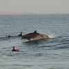 【動画】目の前でイルカのサーフィンがサーフポイント、リンコン