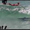 【動画】 バイロンベイで海面にサメが!!!