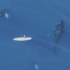 【動画】パドルボーダーの下で鯨が泳ぐinハワイ