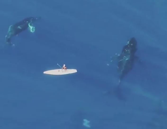 パドルボーダーの下で鯨が泳ぐinハワイ