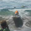 【動画】サーフ犬の痛々しいワイプアウト集