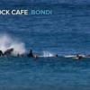 【動画】40フィート(12メートル)のクジラがサーファーを