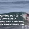 【動画】イルカのように波に乗るサーフボード不要、ボディーサーフィン