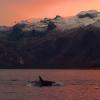 【動画】SUP/カイトサーフィンありはるか北からの魅力的な画像