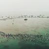 【動画】ウェットスーツの創設者O'NEILL(オニール)の追悼に2,500人が