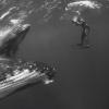 【動画】ザトウクジラを写真家のジェム・クレッシウェ(Jem Cresswell)がフリーダイブで撮影