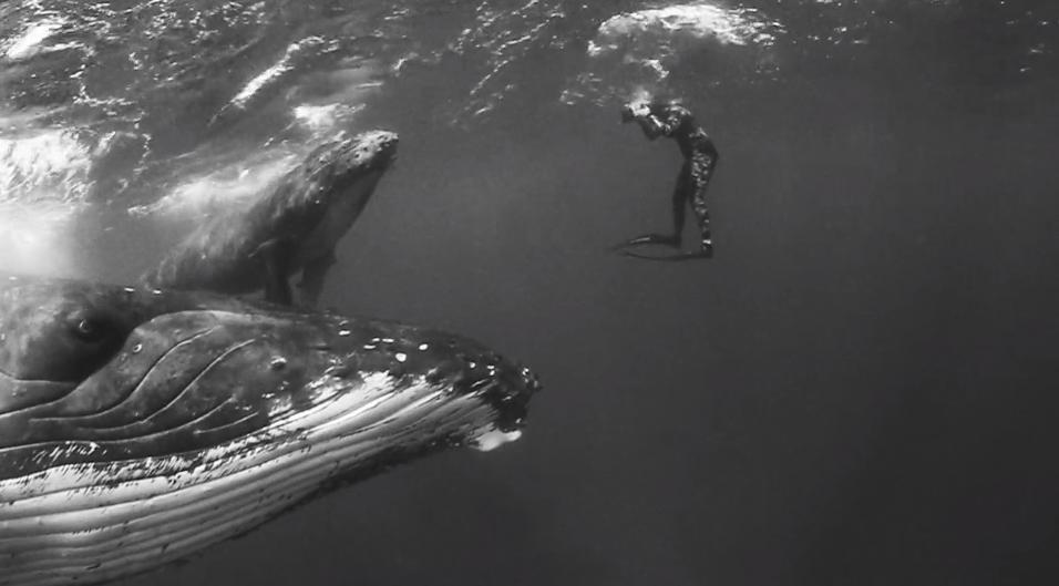 ザトウクジラを写真家のジェム・クレッシウェ(Jem Cresswell)がフリーダイブで撮影