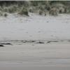 【動画】ニュージーランドの冬、サーフィン終わりに予期せぬ生き物が!